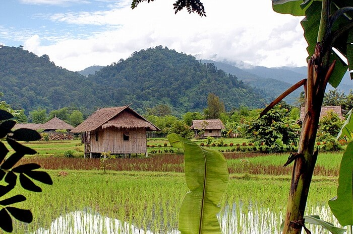 Huts in rice fields of Thailand