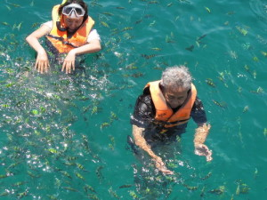 snorkelers surrounded by fish