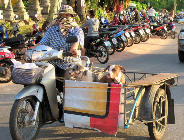 Thailand scooter with sidecar as pet carrier
